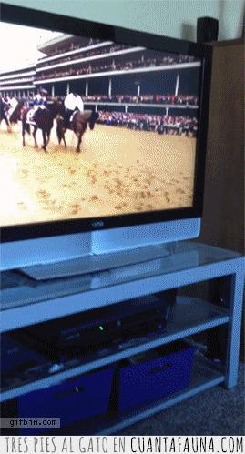 caballos,esperadme,perro,tele