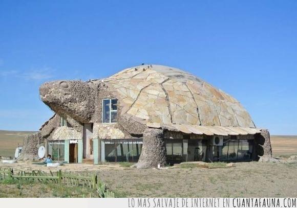 casa,forma,Tortugas