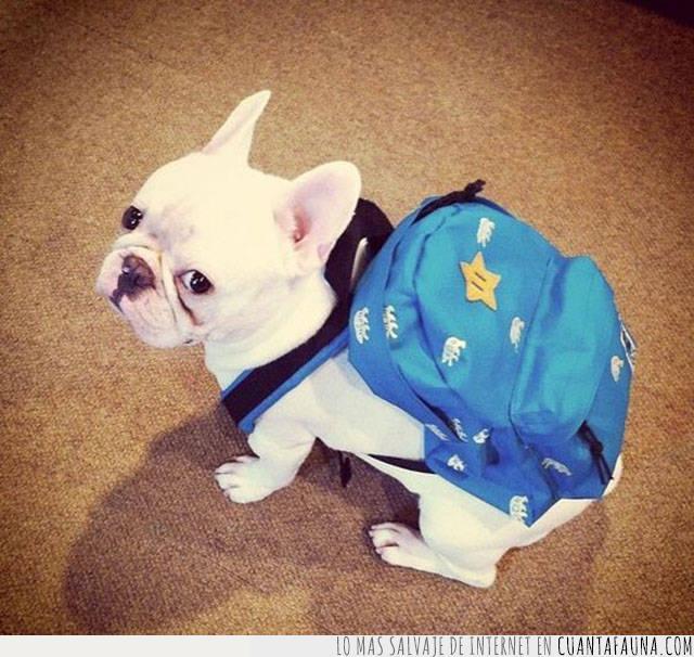 alistar,listo,mochila,perro,vacaciones,viaje