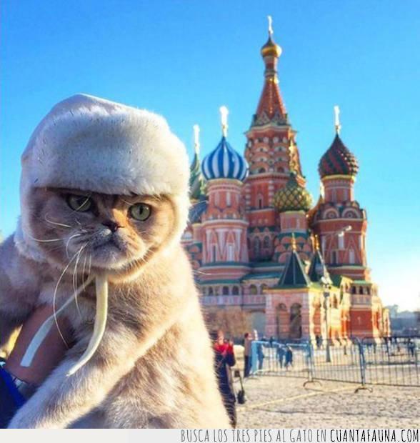 gato,Moscú,plaza roja,Rusia
