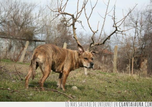 arbol,ciervo,cuernos,fusión,perro,ramas