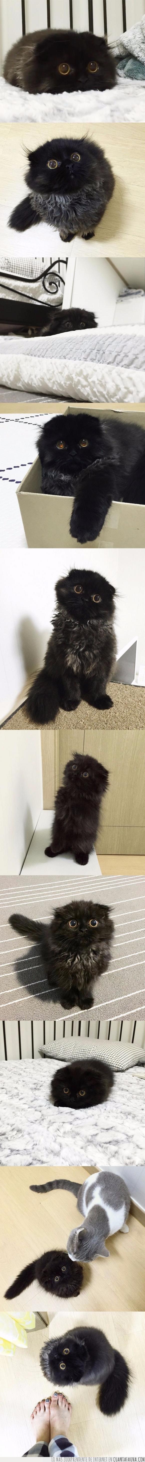 El Viaje de Chihiro,gato,negro,ojos,susuwatari
