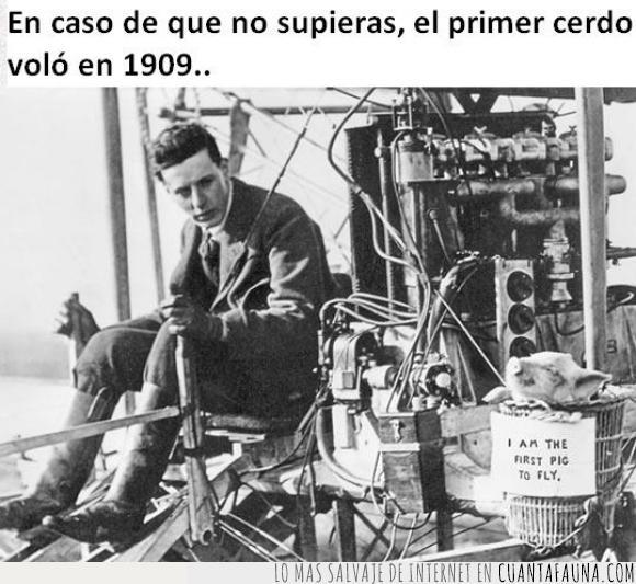 1909,antiguo,avion,cerdo,cesta,genial,volador,volar