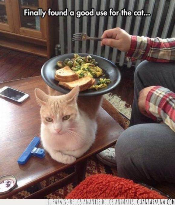 comida,gato,Ikea,mesa,molestar,plato,quiero,uso