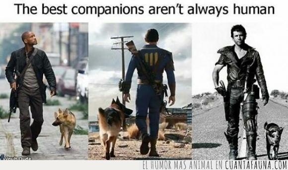 animal,Fallout,mad max,mascota,pastores alemanes,películas,perros,soy leyenda