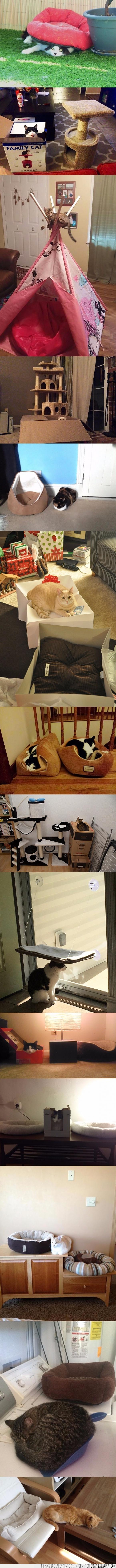 cama,comodidad,comodo,dormir,gato,regalar,regalo