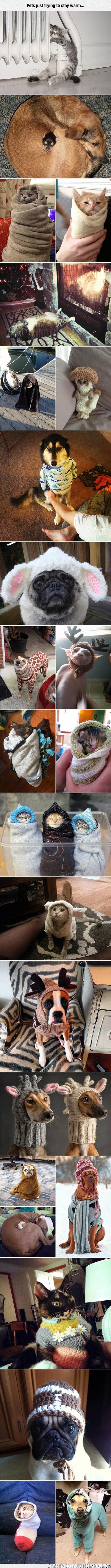abrigar,abrigo,animales,caliente,frio,gato,genial,gorro,perro,tapar