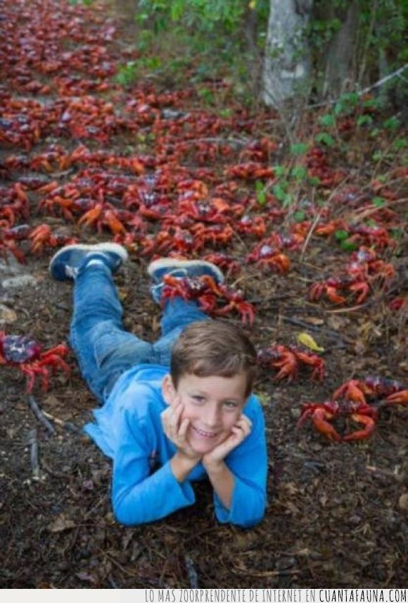 cangrejo,foto,hoja,niño,nope gracias,tumbado