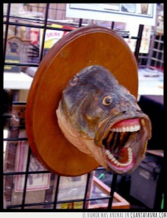dentadura,dientes,miedo,pescado,pez,trofeo