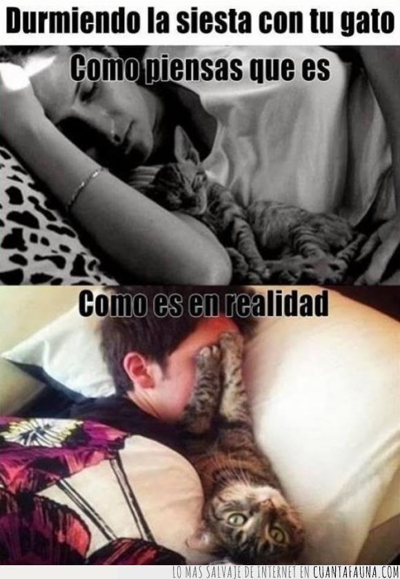 arañazo,boca,dormir,expectativa,gato,pelo,siesta