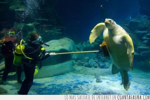 acuario,el mejor trabajo del mundo,escoba,limpieza,tortuga