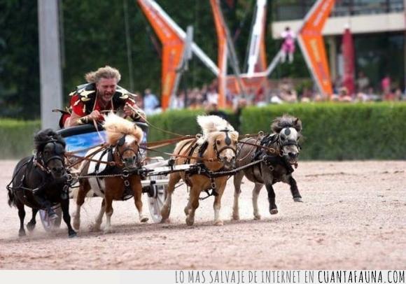 Ben-hur,correr,cuadriga,mini,poni,pony