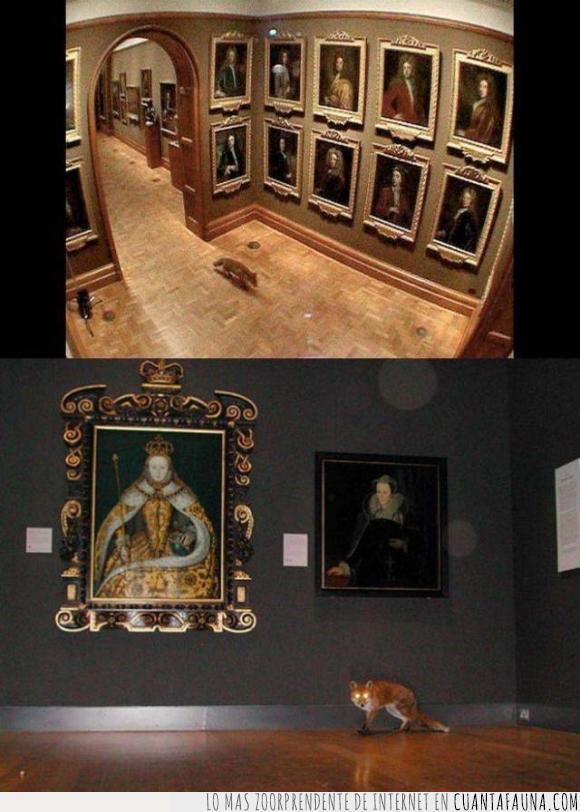 colar,cuadro,museo,zorro