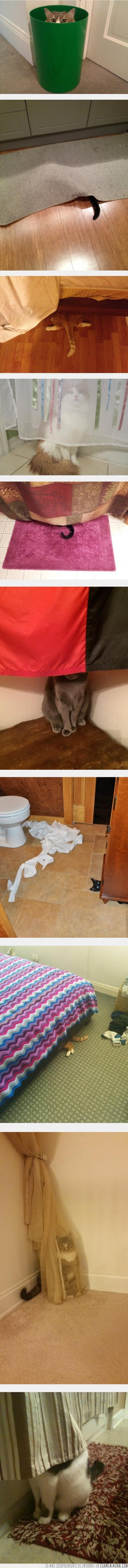 camuflaje,epic fail,esconderse,fail,gato,genial