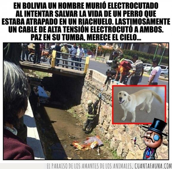 bolivia,cable,electrocutar,hombre,morir,murio,perro,salvar