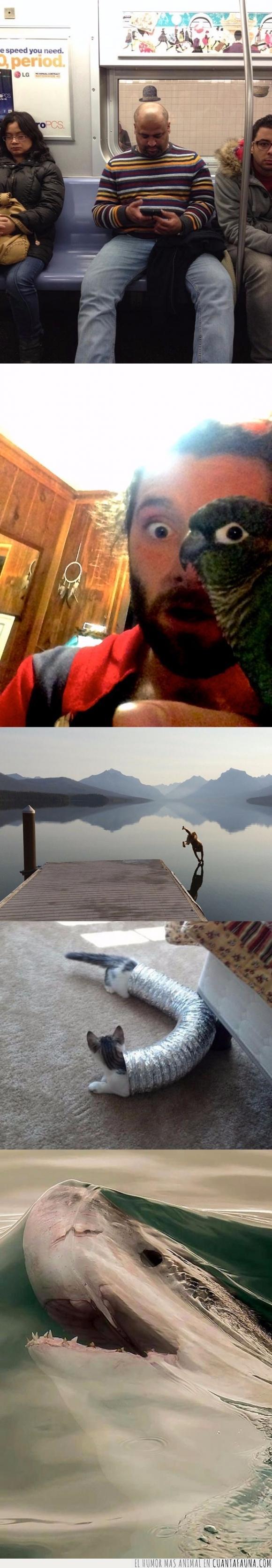 agua,foto,gato,loro,metro,ojo,perfecta,perspectiva,sombrero,tiburon