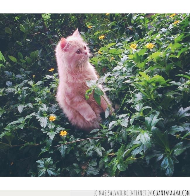 bonito,foto,fotogénico,gato,modelo,plantas,pose,suri,tigrado