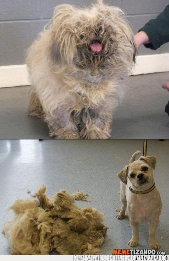 pelo,peluquería,perro,siempre pasa