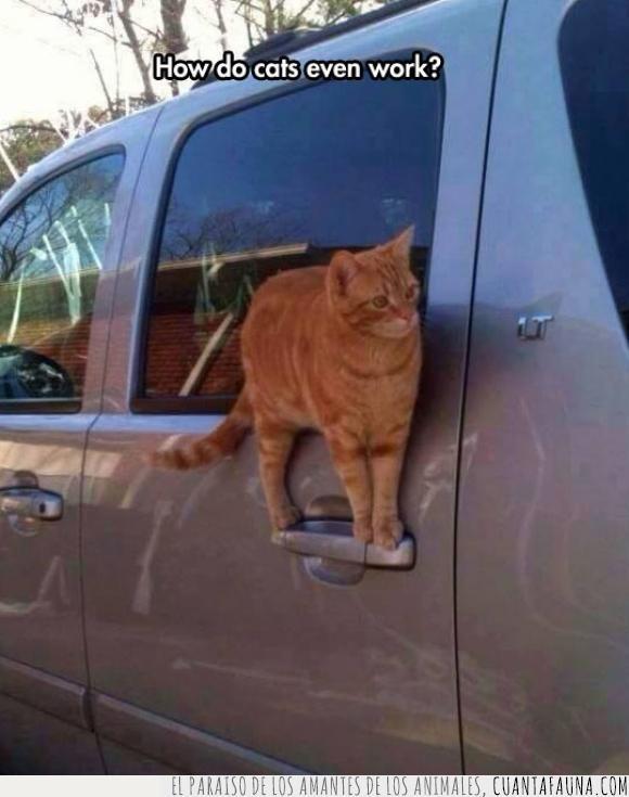 equilibrio,funcionar,gato,maneta coche,puerta,wtf