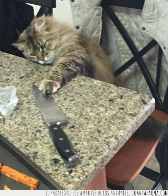 cuchillo,gato,matar,peligro,peligroso