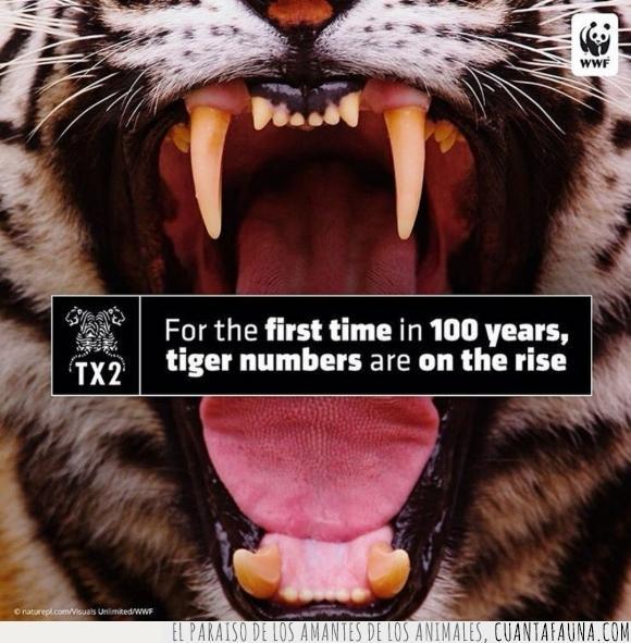 aumenta,Instagram,numero,preservación,tigres