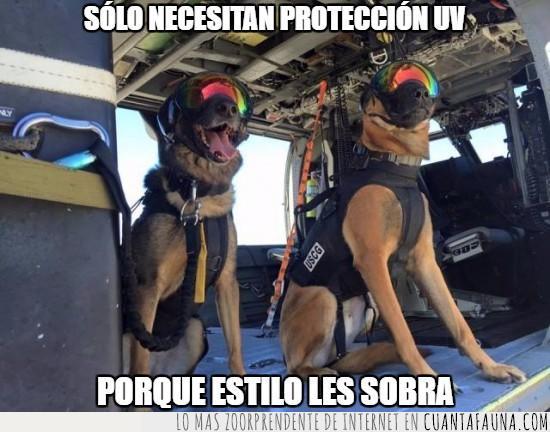 entrenamiento,estilo,gafas,lentes,militar,perros,policía,protección