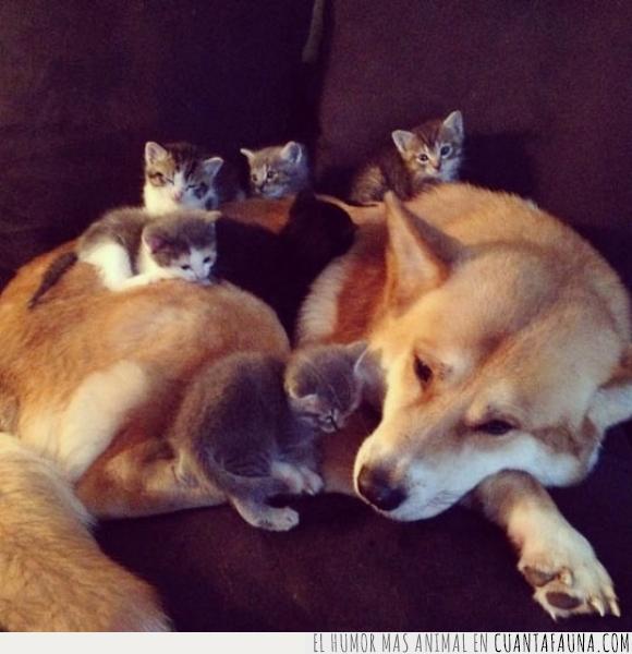cuidar,familia,gato,madre,perro
