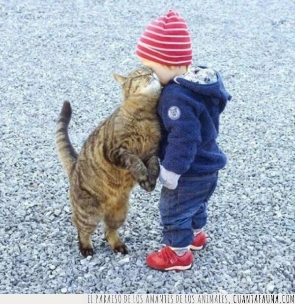 caricia,cariño,gato,mimos,niño