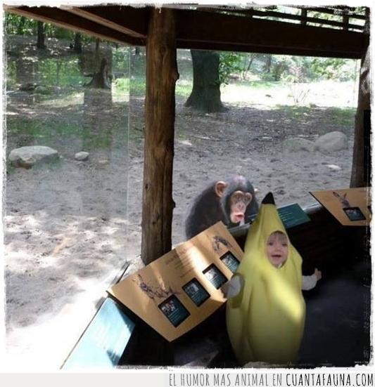 banana,cara,chimpancé,disfraz,expresión,mono,niña,plátano,primate,zoo