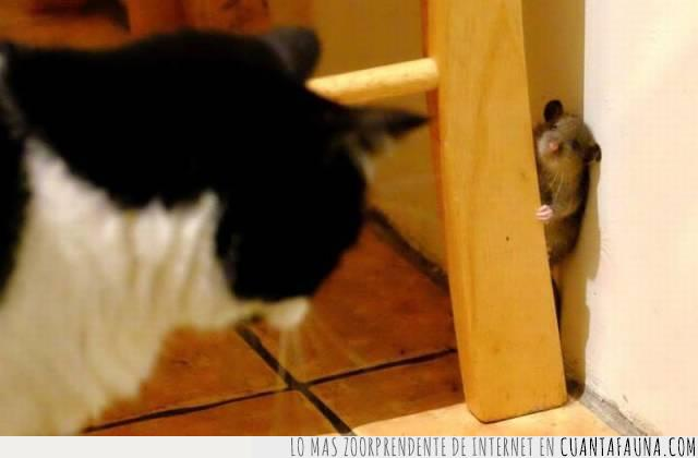 acorralar,cazar,esconder,espada,gata,gato,pared,ratón