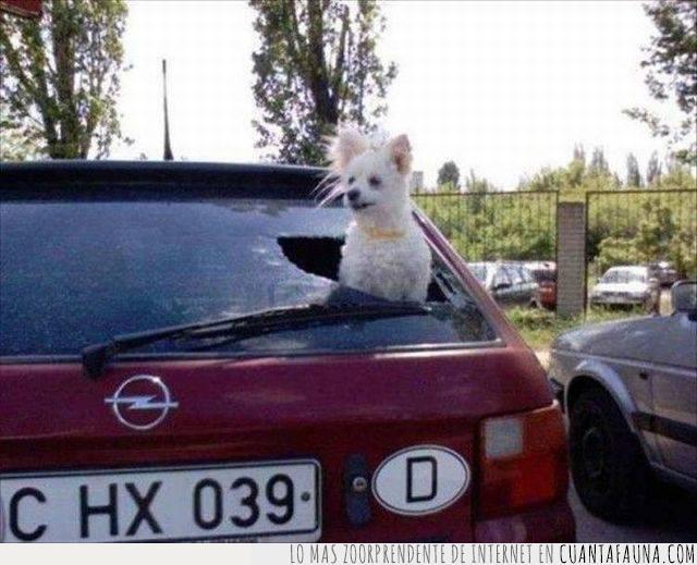 bien hecho,buen samaritano,calor,cinco minutos,coche,cristal,emergencia,excusa,perro,roto,salvar al animal,sofoco,ventana,vidrio