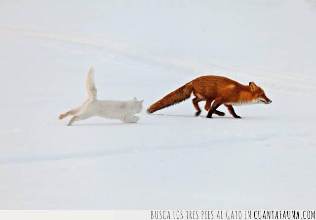 cazar,escapar,gato,hambre,huir,invierno,zorro