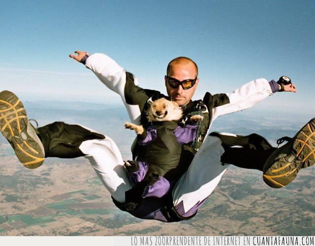 deporte extremo,gusto,paracaídas,perro,prática,salto