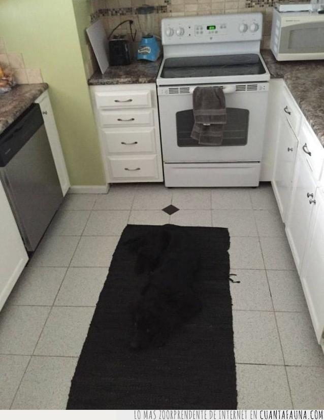 alfombra,camuflaje,color,marrón,negro,no se ve,oculto,perro