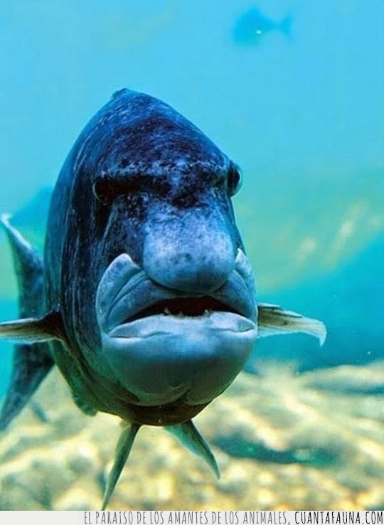 cara,colegio,director,enfadado,escuela,expresión,mueca,pez