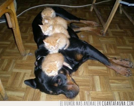 escapar,esconderse,escondite,gatos,perro,precaución,suelo