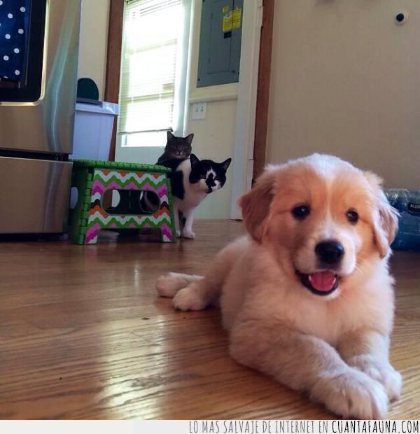 ataque,cachorro,gatos,inesperado,maldad,malvados,planificar,pobre