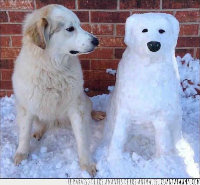 escultura,imitación,muñeco,nieve,perro