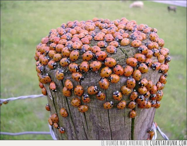 efecto,grupo,insectos,mariquitas,primavera