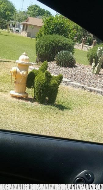 arbusto,genio,jardinería,ornamental,perro,podar,troll