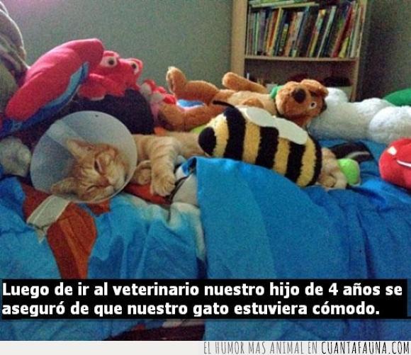 cama,cuidar,doctor,gato,genial,niño,peluches,tierno