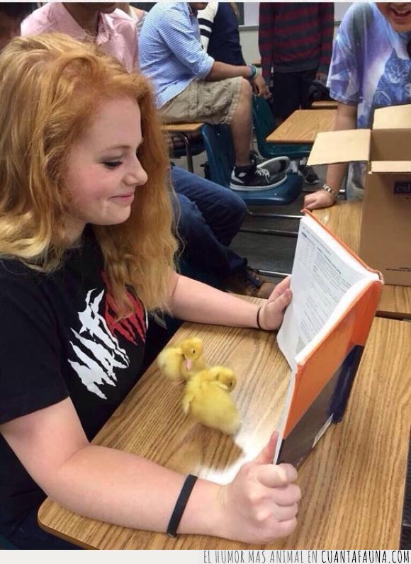 amarillo,chica,clase,escondido,estudiar,estudio,libro,patito,patos,pelirroja