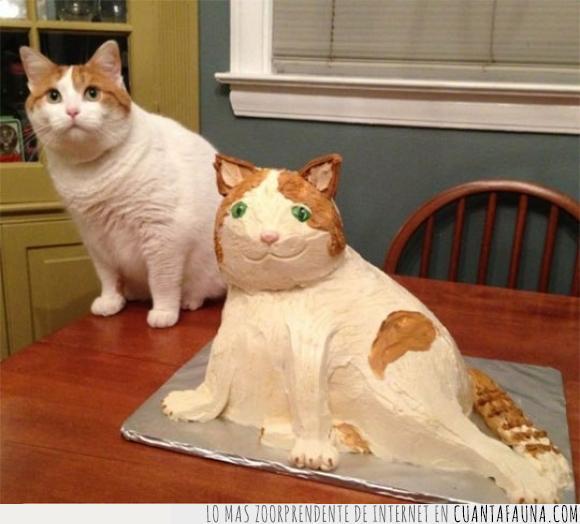 fail,gato,intento,pastel,wtf