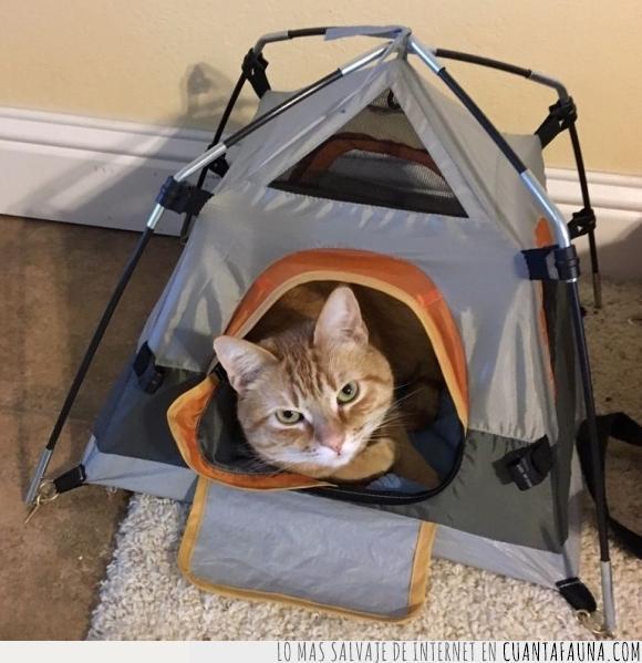 camping,casa,felino,gato,tienda de campaña