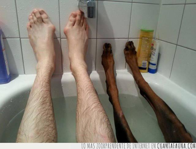 bañera,baño,compañero,gusto,patas,perro,pies,relajados