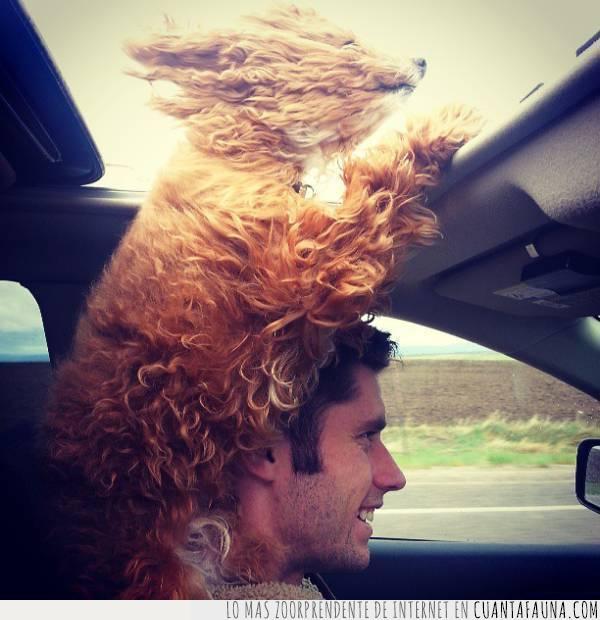 coche,conducir,correr,gusto,perro,techo,velocidad,ventana,viento