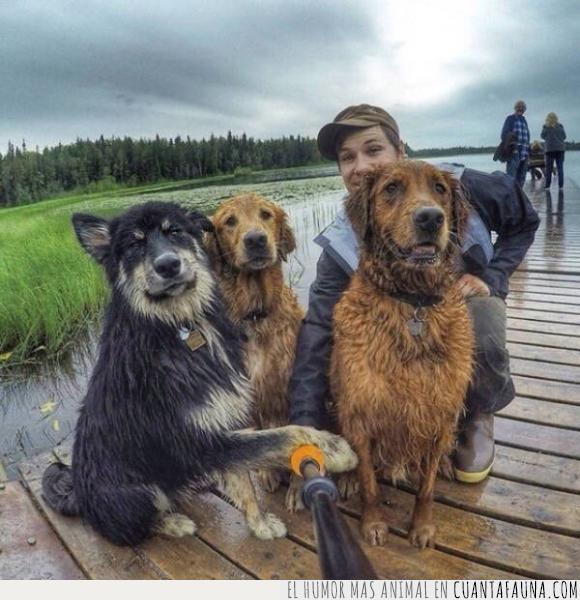 instagram,mojado,palo,perro,selfie