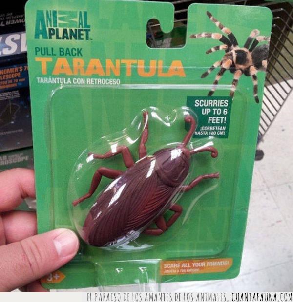 Animal Planet,arácnido,araña,clase,cucaracha,especie,insecto