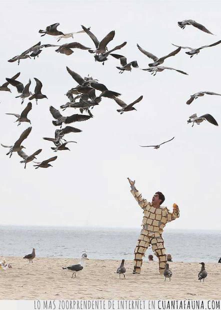 aves,gaviotas,playa,riesgo,tostadas