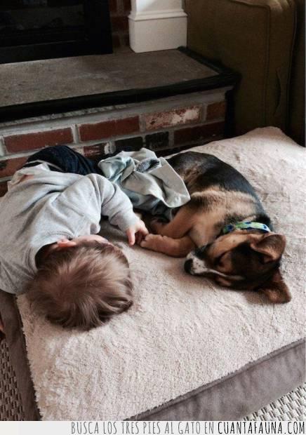 compañeros,compañía,dormir,juntos,niño,perro